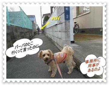 IMGP1441_20121224003650.jpg