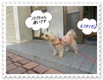 IMGP1446_20121224003841.jpg