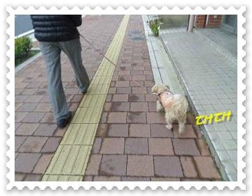 IMGP1468_20121224004719.jpg