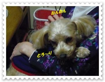IMGP1580_20121226002047.jpg
