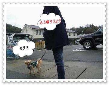 IMGP1708_20121231231835.jpg