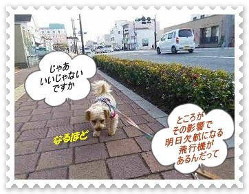 IMGP2385_20130116221907.jpg
