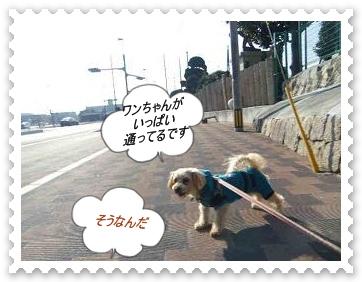 IMGP2549_20130120000402.jpg