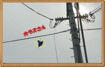 IMGP3065_20120713235944.jpg