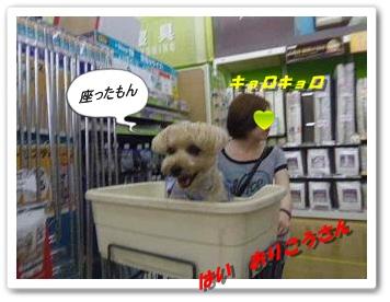 IMGP3208.jpg