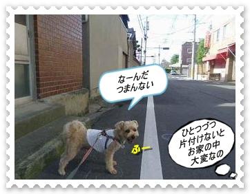 IMGP3236_20120717000516.jpg