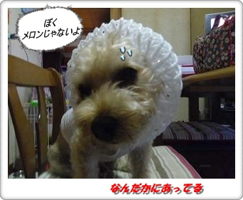 IMGP3251_20120717001357.jpg
