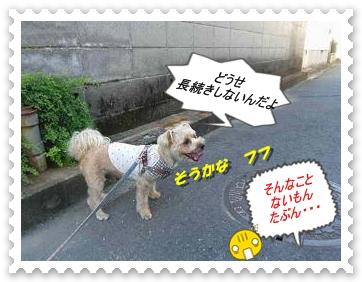 IMGP3290.jpg