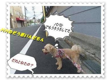 IMGP3511_20120723235629.jpg