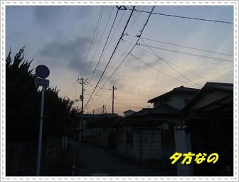 IMGP3526.jpg
