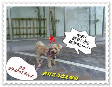 IMGP3542.jpg