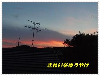 IMGP3669.jpg
