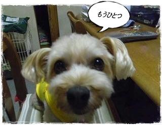 IMGP3746_20120729001756.jpg