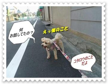 IMGP3829.jpg