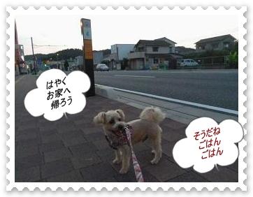 IMGP3861_20120731073212.jpg