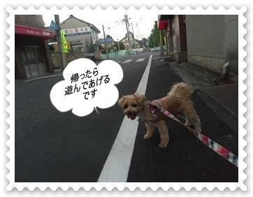 IMGP5501_20120830230340.jpg