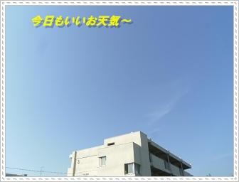 IMGP8389_20121027002123.jpg