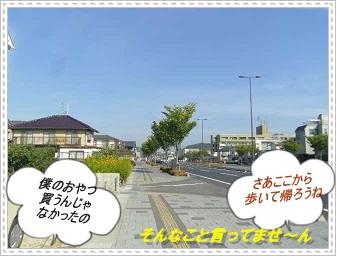 IMGP8401.jpg