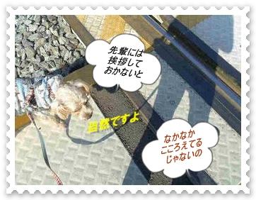 IMGP8413_20121027003247.jpg