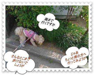 IMGP8442_20121028000020.jpg