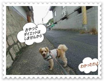 IMGP8524_20121029004238.jpg