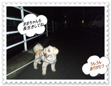 IMGP8542_20121029005108.jpg