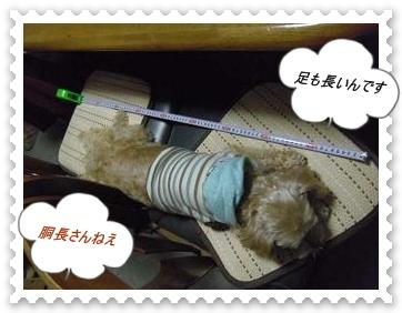 IMGP8553_20121029005547.jpg