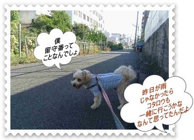 IMGP8578_20121030003009.jpg