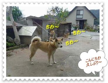 IMGP8588_20121030003914.jpg