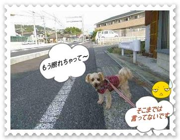 IMGP8629_20121031002558.jpg