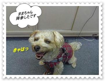 IMGP8668.jpg