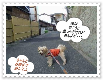 IMGP8701.jpg