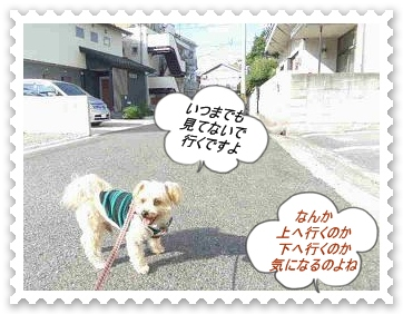 IMGP8897.jpg