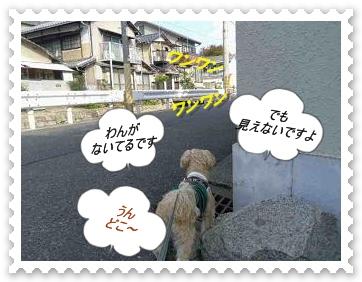 IMGP8898.jpg