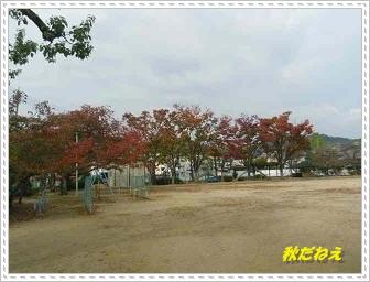 IMGP9180_20121109000947.jpg
