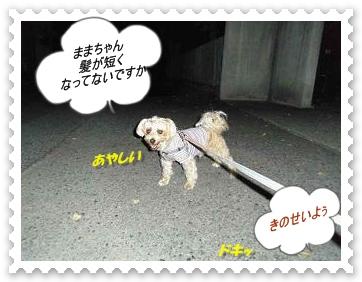IMGP9276_20121110002139.jpg