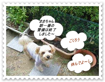 IMGP9286_20121111000937.jpg