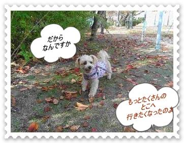 IMGP9301_20121111001404.jpg
