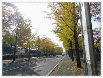 IMGP9325.jpg