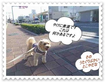 IMGP9871.jpg