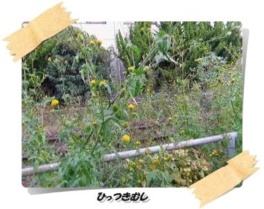 IMGP9932.jpg