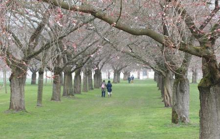 シュヴェツィンゲンの桜並木2