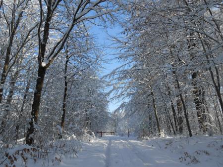冬のSchönbuch2