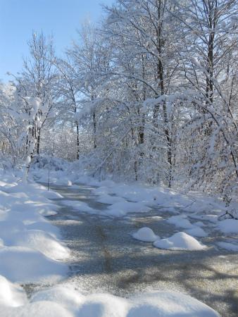 冬のSchönbuch3