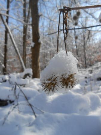 冬のSchönbuch6