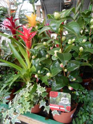 植物コーナー1