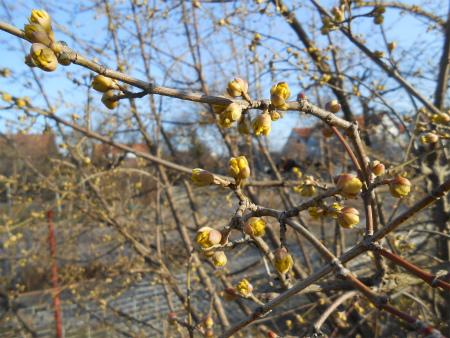 黄色い枝花