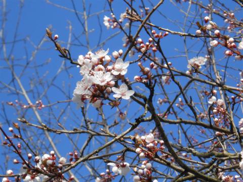 春が来た5