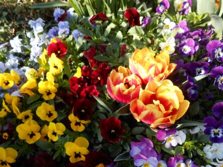店の前の花壇1