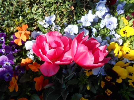 店の前の花壇2